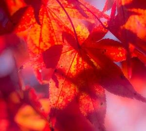 Herbst_Stadtpark_2015-3
